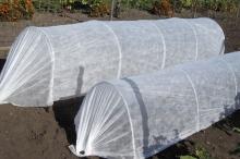 Спанбонд в качестве укрывного материала хорошо пропускает воздух и создает микроклимат для растений